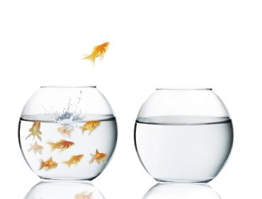 goldfish jumping out of water